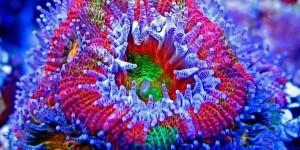 fluorescentnikorali